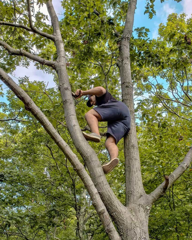 A Different Kind of Climb | Up a Tree
